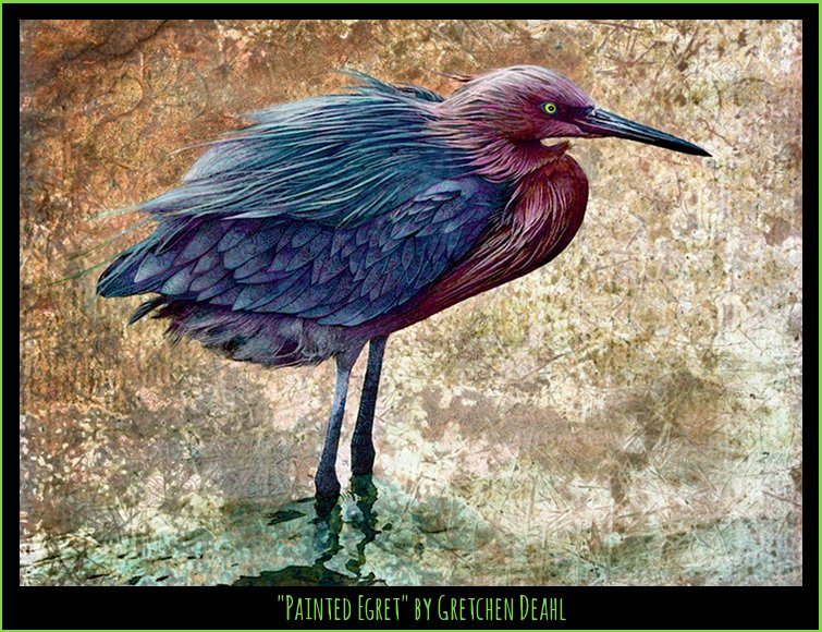 "Other Cool Birds ""Painted Egret"" by Gretchen Deahl"