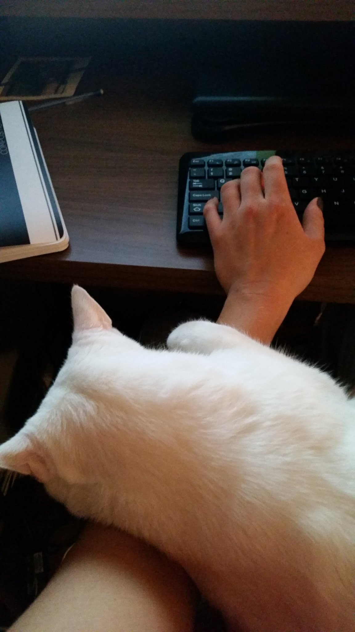 Jessica Evans Writing